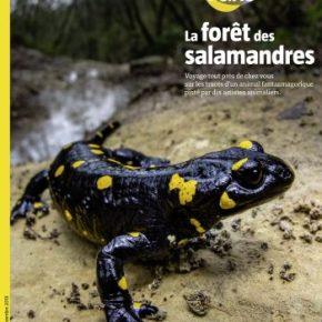 Salamandre, la revue des curieux de nature – 248 : octobre-novembre 2018