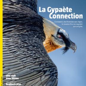 Salamandre, la revue des curieux de nature – 249 : décembre 2018-janvier2019