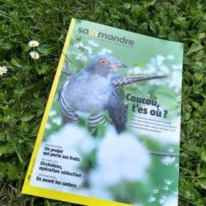 Salamandre, la revue des curieux de nature – 251 : avril-mai2019