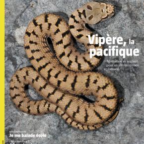Salamandre, la revue des curieux de nature – 252 : juin-juillet2019